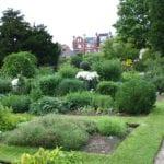 Growing healing remedies: the physic garden