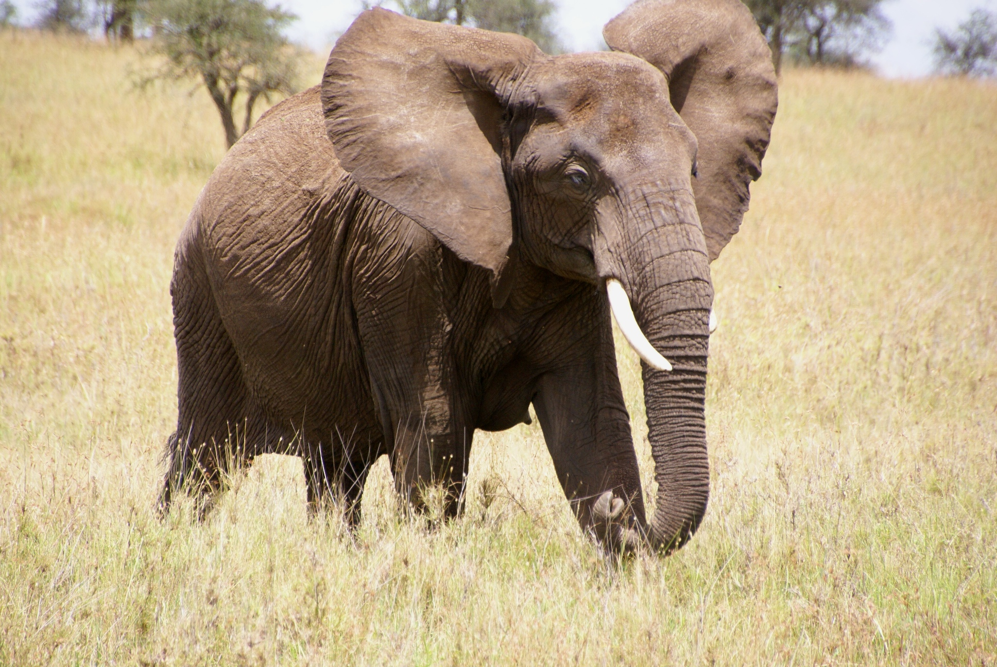 Favourite poem: Les Elephants (The Elephants) by Leconte ...